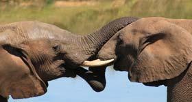 Elefanten retten in Thailand
