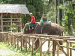 Freiwilligenarbeit in Thailand