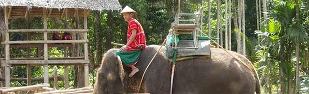 Elefanten Projekt