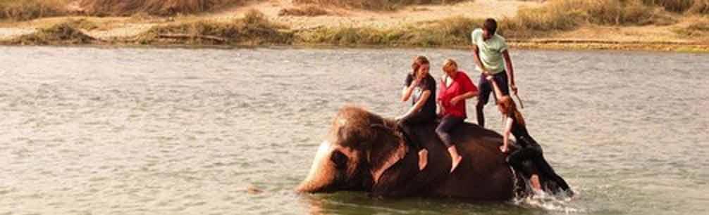 Elefantenpflege und Öko-Papier